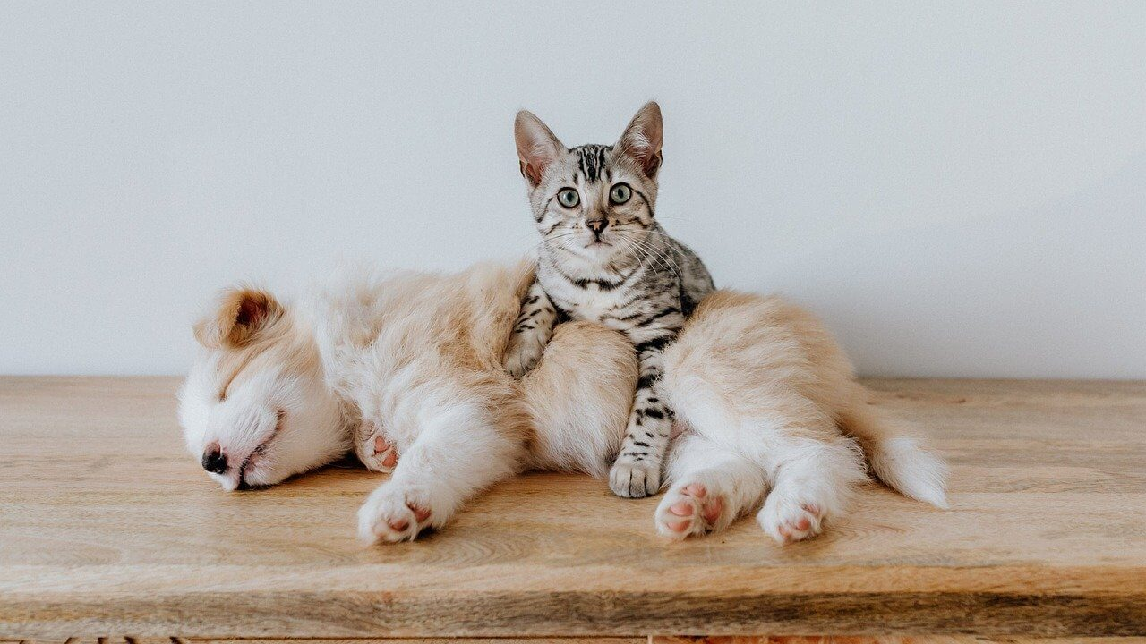 Puppy and kitten lying on a wood surface